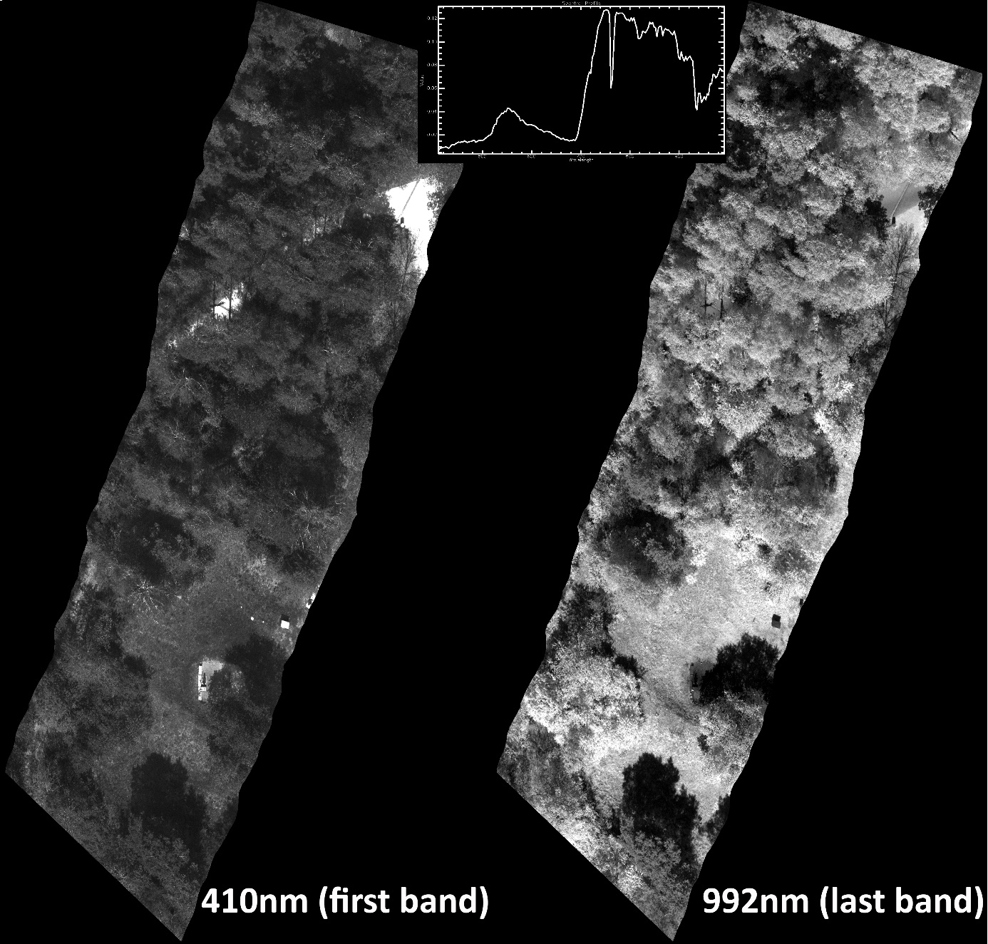First and last band of a Mjolnir V-1240 hyperspectral cube and example radiance spectrum from vegetation (single-pixel/band, no binning).
